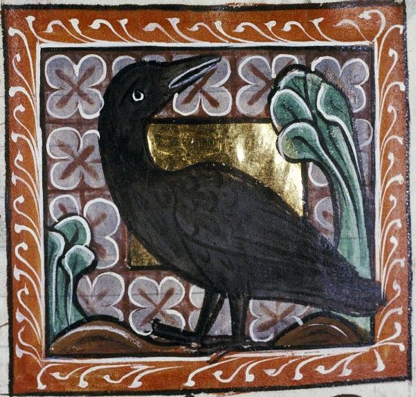 Bodleian crow