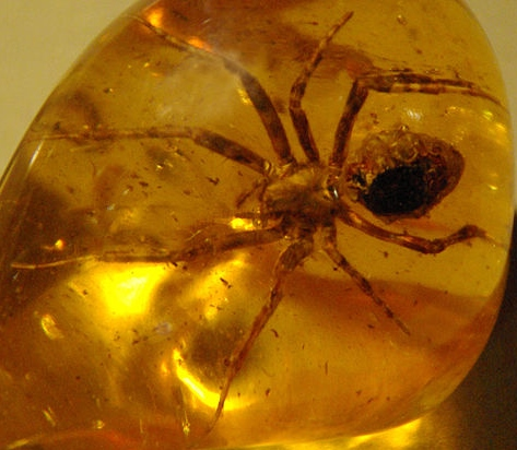 Spider in amber (Wikipedia Commons)