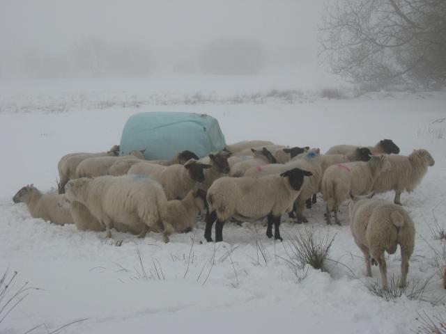 Winter on the Preseli Hills, Pembrokeshire, Wales