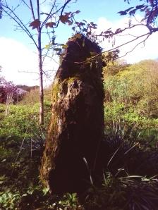 Menhir, Temple Druid, Pembrokeshire