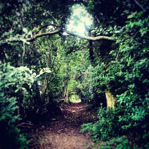 Forest-Path
