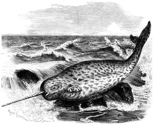 Image of narwhal from Brehms Tierleben 1864–1869 (public domain)
