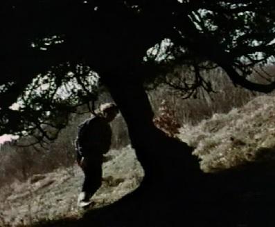 Cuckoo Tree (Puffin)